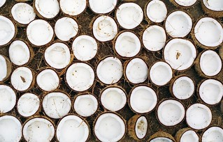 Coconuts | by Xipe Totec39