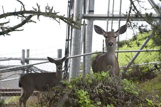 Deer and Fence | by Ben Zvan