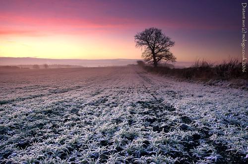 winter david cold tree sunrise frost foster feed facebook subfoz mologo flickrplatinum