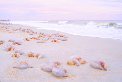 pink beach beautiful sunrise jellyfish florida fl babel pontevedrabeach