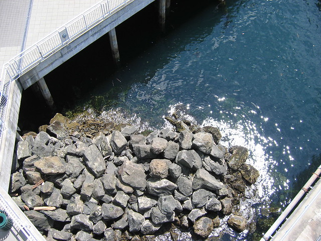 Harbor Rocks