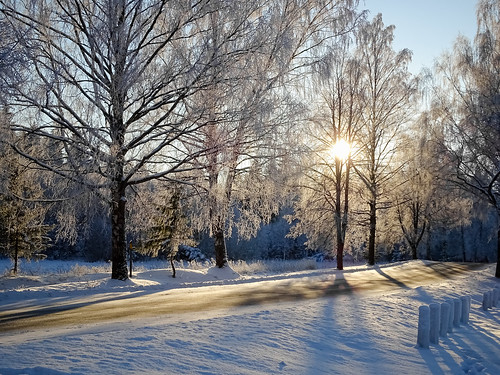 road trees winter sunset sky white snow nature landscape town frost shadows outdoor branches latvia backlit sunlit aluksne