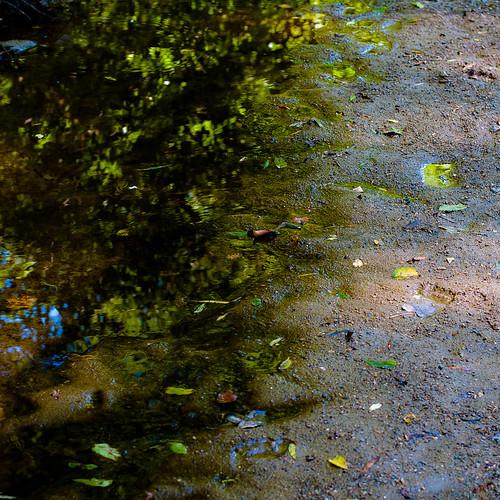 light shadow summer sunlight abstract blur reflection water leaves forest river square landscape still woods nikon quiet mud natural shore stillness kokosingriver d5000 noahbw