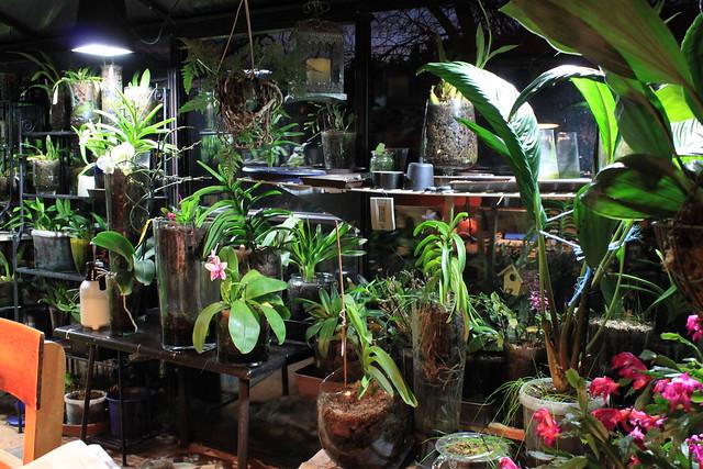 Wintergarten mit Orchideen in Gläsern.