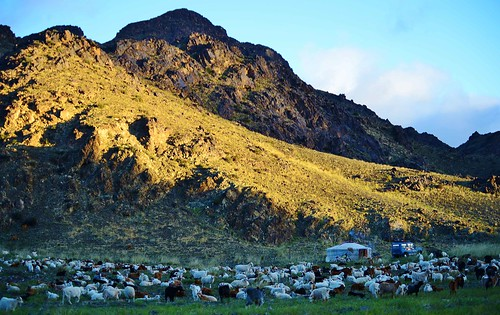 asia sheep mongolia goats centralasia livestock traditionalculture gers gobidesert herders nomadicherders tostuul