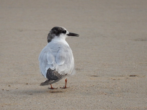 Punta Perula - vogel