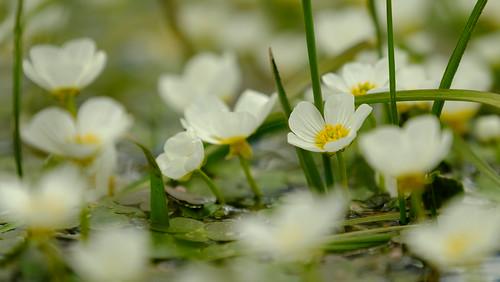 Flores imergiram
