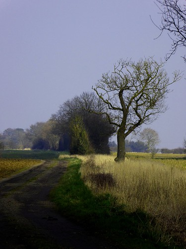 england tree field countryside beds path country bedfordshire oldwarden