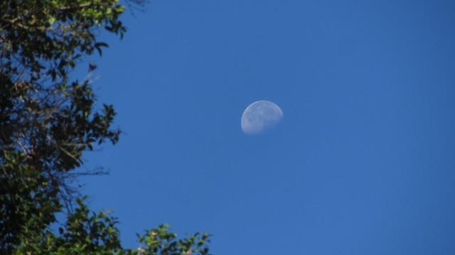 IMG_7179 moon from goleta backyard