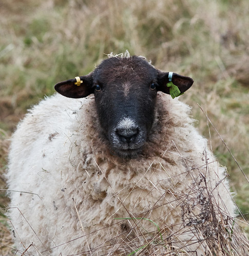 Ewe lookin' at me? | by Tim. Bennett