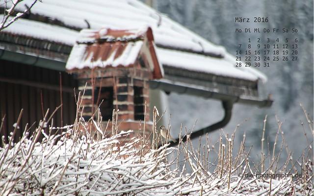 spatzimschnee_maerz_kalender_die-photographin