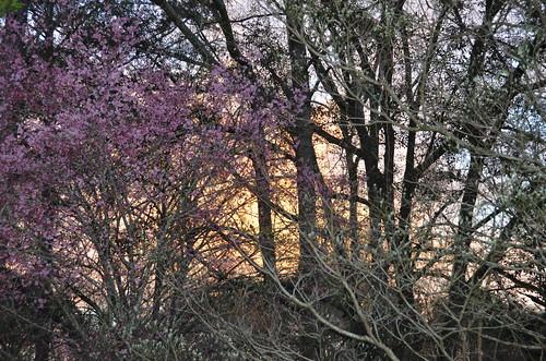sunrise florida tallahassee