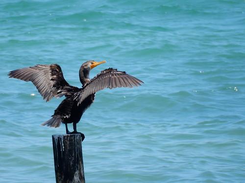 Puerto Juarez - bird