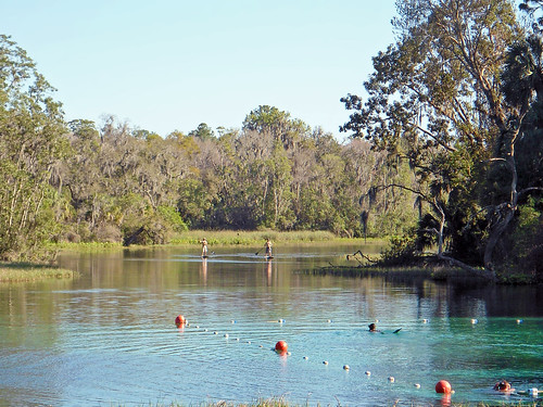 trees water river landscape woods scenery florida springs dunnellon