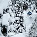Mark Abma skiing powder at Mica Heli skiing, British Columbia, Canada., foto: archiv autorky