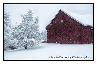 Winter Red _DSC4838.jpg