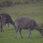 Sri Lanka - Horton plains
