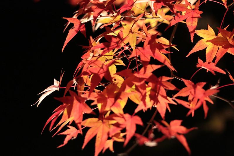 20141122-武奈ヶ岳&京都ライトアップ-0636.jpg