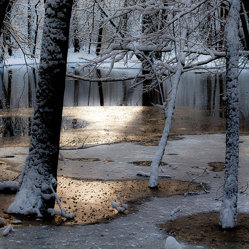 autumn trees light sunlight snow cold reflection ice water forest river square landscape frozen still woods nikon quiet freezing stillness desplainesriver d5000 captaindanielwrightwoods noahbw