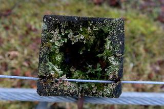 Fencepost garden 01/#46plant