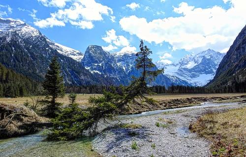 alps tree austria tirol österreich spring pasture alpen plain alp spruce baum tyrol eng tal fichte karwendel ahornboden claudemunich vomp ostalpen rissbach hinterriss bigmapleplain alpineparkkarwendel risbach groserahornboden engalpe
