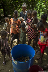 Local villagers look at the invasive Asian toads collected in their village the previous night, near Farafaty, Toamasina Madagascar Jan 2016  photo copyright James T. Reardon-8821