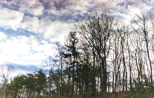 reflection canon landscape virginia us unitedstates newport pandapaspond canonm