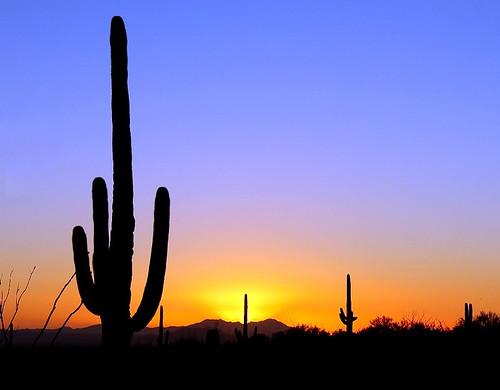 travel blue sunset arizona cactus orange usa black nature silhouette nationalpark desert saguaro