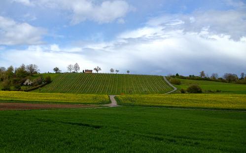 green nature field yellow landscape schweiz switzerland vines suisse natur gelb grün svizzera landschaft reben iphone rapsfeld kantonzürich rapefiled duqueiros takenwithiphone4s