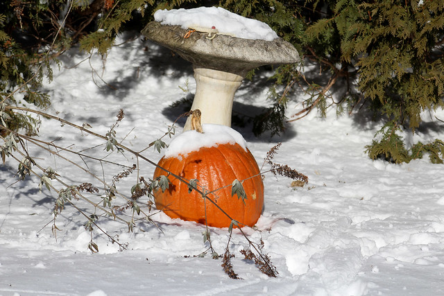 Pumpkin in snow