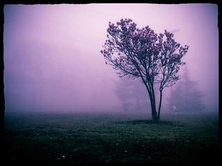 Foggy Morning Tree: Redux | by -Jeffrey-
