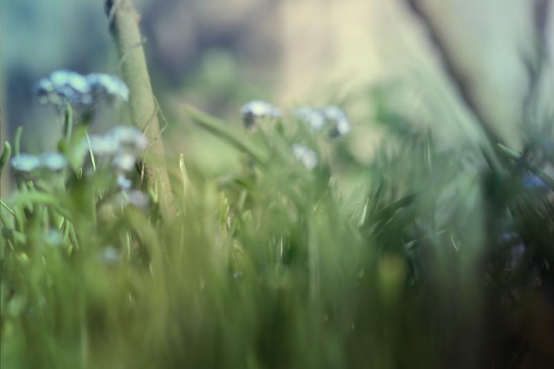 blur-dreamy-texture-texturepalace-43