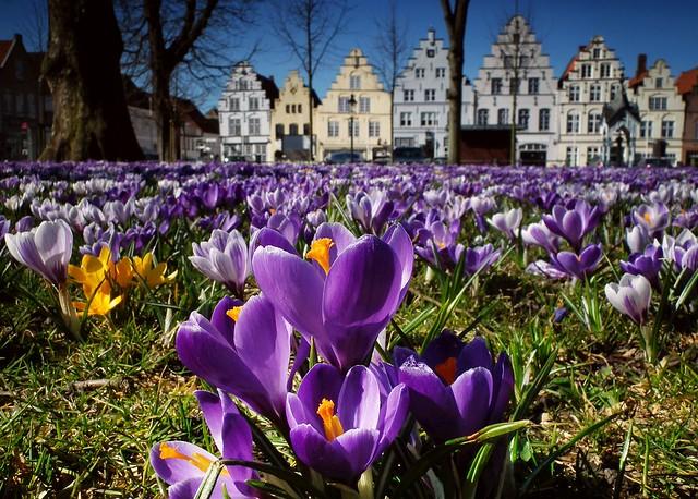 Wenn der Frühling beginnt...