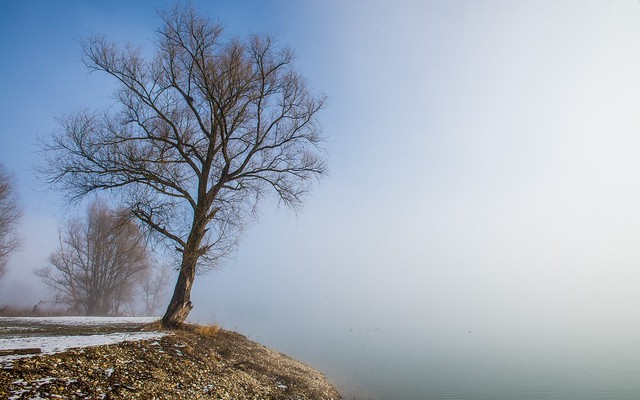 lake Zajarki (51) - foggy morning