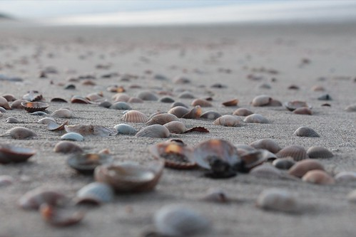 Some shells | by alxfink