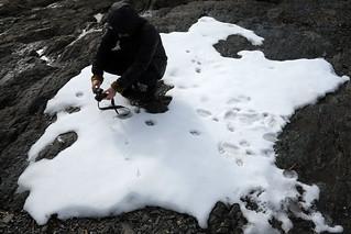 12by12 c06p04 - shrinking polar bears