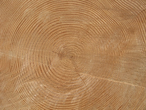 Tree Rings | by Tracy O