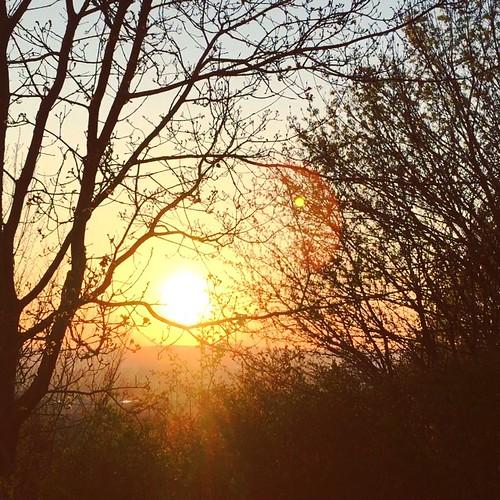 Concert #birds #nightingale #sunset #sunporn #trees