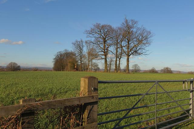 Winter Landscape @ Surrey