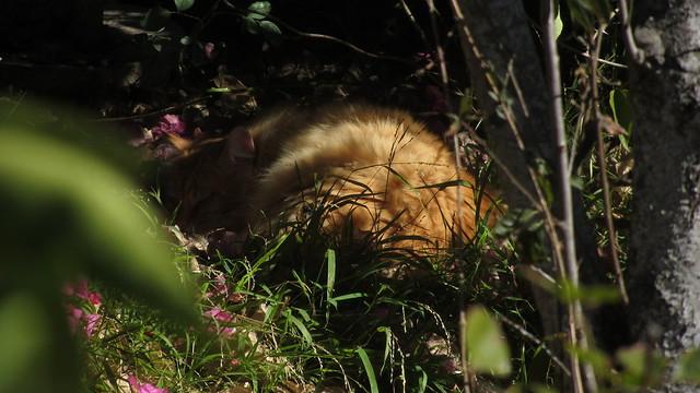 IMG_8566 Dewey cat