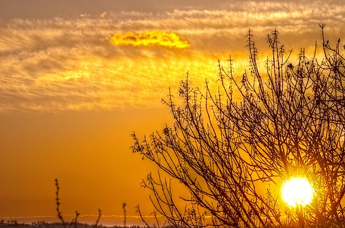 light sky tree yellow clouds sunrise landscape jour nuages paysage arbre contrejour k5 matin aurore leverdesoleil