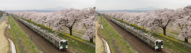 Hitome-Senbon-Zakura and Tohoku Line, 4K UHD, stereo cross view
