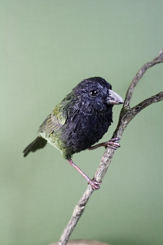 Black-Faced Grassquit bird sculpture of paper and wood