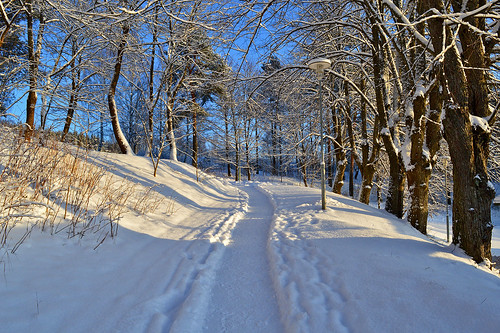 winter talvi landscape forest maisema talvimaisema lunta cold frost pakkanen nature luonto lumi nikon polku path d3200 nikond3200 europe finland