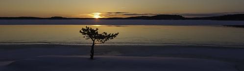 winter sunset sun snow pine canon finland landscape 5d lappeenranta 2470mm