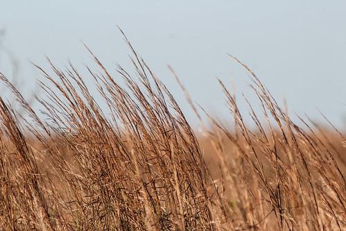 sky grass minimalist portaransas earthtone
