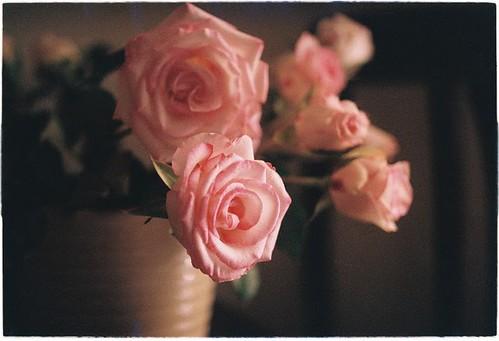 roses in a vase | by salazar62