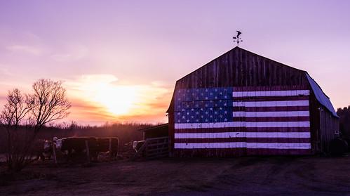 bluengold landscape winter vermont oakhillroad williston sunset america barn cows red unitedstates us