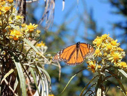 Reserva Mariposa Monarca - 3