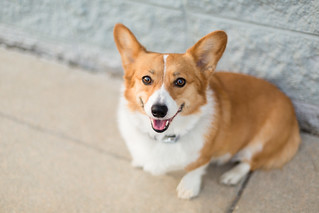 Taffy All Smiles | by Brian.Buckler